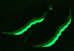 暗闇でグラデラインがグリーンに光る